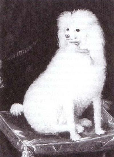 Boy, Prince Rupert's Dog